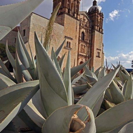 8 Templo de Santo Domingo Oaxaca